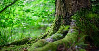 Cómo reconocer cada tipo de madera y árbol de LAS 20  MADERAS MÁS POPULARES EN ARGENTINA