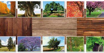 Tipos de maderas argentinas / peso unitario de cada madera (kg./m3) y algunas definiciones